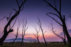The frame of dead tree Royalty Free Stock Image