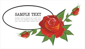 Frame decorated with luxury rose. Vector drawing of the frame decorated with red rose Stock Photos