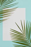 Frame decorated with palm leaves Stock Photo