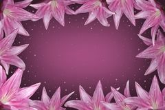Purple lilies royalty free stock photography