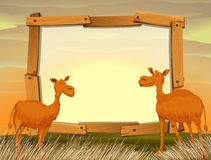 Frame design with camels in the field Stock Photo