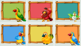 Frame design with parrots Stock Photos