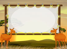 Frame design with two camels in the field Royalty Free Stock Photos