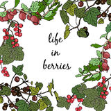 Frame different berries. Red currant, black raspberry, gooseberry. Hand drawn vector illustration Royalty Free Stock Photography