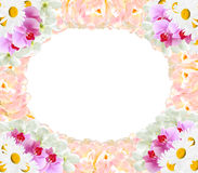 Frame from different flowers orchids tulips camomile Royalty Free Stock Photography