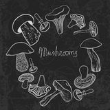 Frame of different hand drawn mushrooms on Stock Photo
