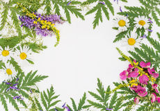 Frame with different herbs and flowers Stock Photo