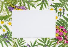 Frame with different herbs and flowers. Frame with fresh branches, green leaves, herbs, chamomile, vetch and other multicolored wildflowers and white paper card royalty free stock photo