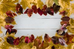 Frame of different yellow and red autumn leaves on a. White table stock photos