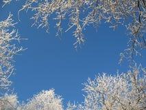 Frame do inverno Fotos de Stock Royalty Free