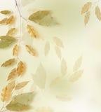 Frame do outono Fotografia de Stock