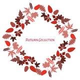 Frame do outono Fundo do vetor Ilustração do vetor Teste padrão floral do vetor Projeto gráfico da forma Conceito da beleza Colo  Imagens de Stock Royalty Free