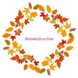 Frame do outono Fundo do vetor Ilustração do vetor Teste padrão floral do vetor Projeto gráfico da forma Conceito da beleza Cores Imagens de Stock