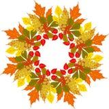 Frame do outono Fundo do vetor Ilustração do vetor Teste padrão floral do vetor Projeto gráfico da forma Conceito da beleza Colo  Fotografia de Stock Royalty Free