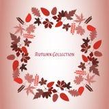 Frame do outono Fundo do vetor Ilustração do vetor Teste padrão floral do vetor Projeto gráfico da forma Conceito da beleza Cores Imagens de Stock Royalty Free