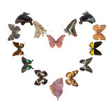 Frame do sharp do coração da borboleta Foto de Stock