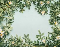Frame of Dog-roses with white flowers on light blue. Background, top view Stock Photos