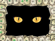 Frame from dollars and cat's eyes in the darkness. Frame from the dollars and intent cat's eyes in the darkness royalty free stock photography