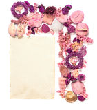 Frame with  dried flowers old paper  isolated on white backgroun. Frame with sea shells, dried flowers, twigs, leaves, petals  and old paper isolated on white Stock Photos
