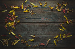 Frame from the dried petals of flowers royalty free stock photo