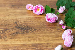Frame with dried rose petals and buds Stock Image