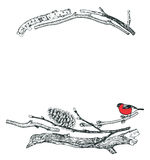 Frame of Driftwood and Bullfinch Sketch style Hand drawing Stock Photography
