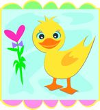 Frame Duck with Heart Flower Royalty Free Stock Images