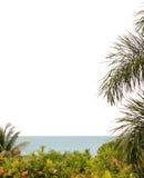 Frame editorial tropical imagens de stock