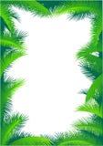 Frame em folha de palmeira Foto de Stock Royalty Free