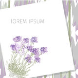 Frame with empty place for text or picture. White colored interior, with lavender flowers, Mock up. Stock Photo