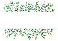 Frame of a eucalyptus branches.green floral border. Royalty Free Stock Photos