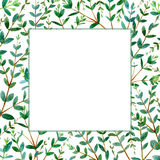 Frame with eucalyptus branches.Green floral border. Royalty Free Stock Photo