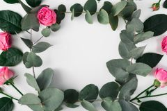 Frame of eucalyptus branches and pink roses royalty free illustration