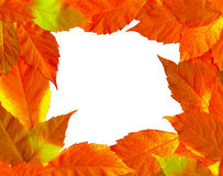 Frame of fall leaves Royalty Free Stock Image