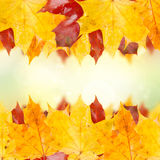 Frame of fall leaves Royalty Free Stock Photo