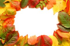 Frame of fallen autumn leaves Royalty Free Stock Photography