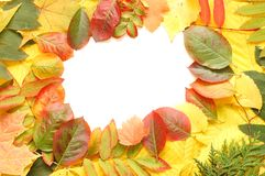 Frame of fallen autumn leaves Royalty Free Stock Photo