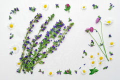 Frame with field flower clovers and chamomile Royalty Free Stock Image