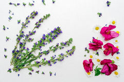 Frame with field flowers pink tea rose and chamomile Royalty Free Stock Images