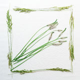 Frame with field grass on white background Royalty Free Stock Photos