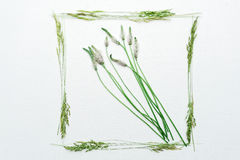 Frame with field grass on the white background Stock Image