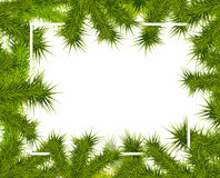 Frame of fir branches Royalty Free Stock Image
