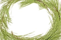 Frame from fir tree. On a white background Stock Photo