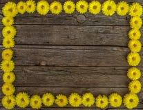 Frame floral Imagem de Stock