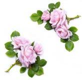 Frame floral abstrato no fundo branco Fotografia de Stock Royalty Free