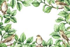 Frame floral com pássaros ilustração do vetor