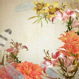 Frame floral, lily Royalty Free Stock Images