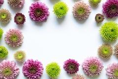 Frame floral no fundo branco Fotos de Stock Royalty Free