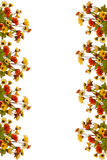 Frame of flower Royalty Free Stock Photo