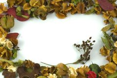 Frame Flower Stock Image